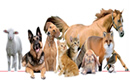 prodotti animali